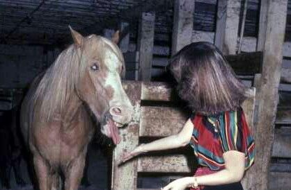 Elvis's beautiful horse Rising Sun here in 1982.. RIP Rising Sun he died 1986 with his master now also buried at Graceland