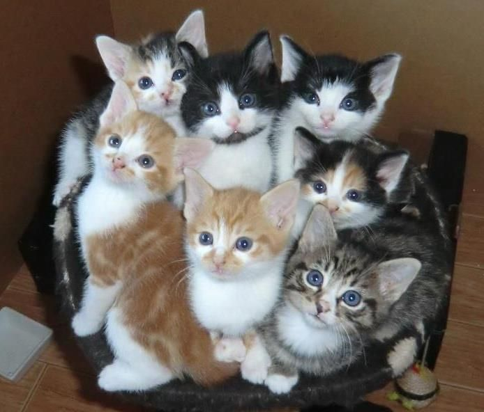 kittens | Here are Rubies seven kittens, they are 5 weeks. | By: dolphinboy18 | Flickr - Photo Sharing!