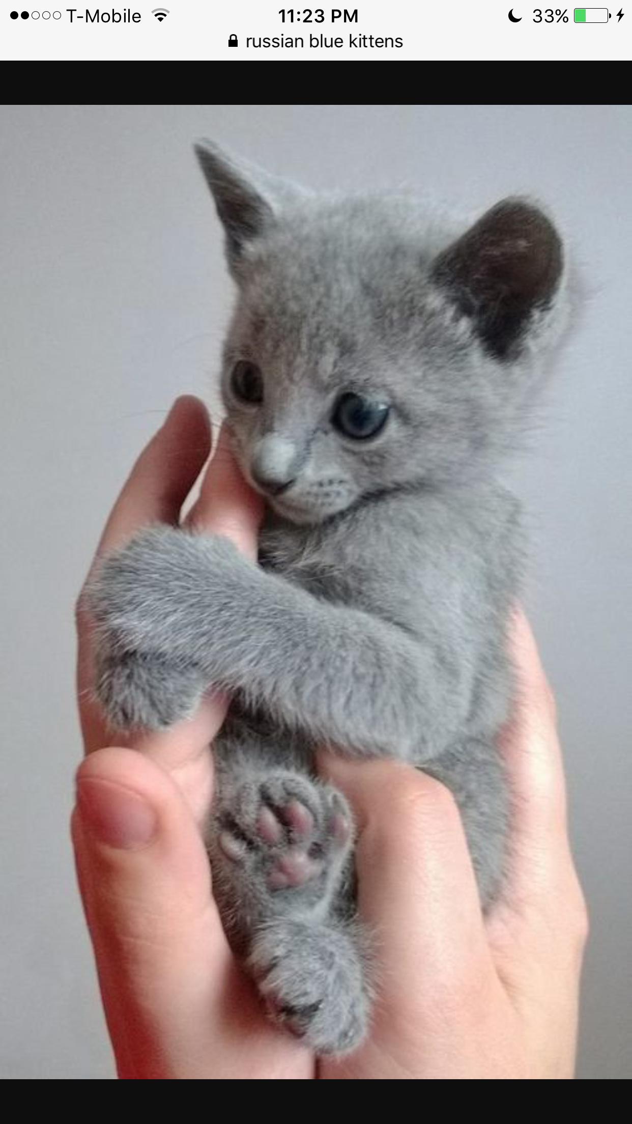 Gattino Grigio, Gatti Grigi, Nomi Per Un Gattino, Gattini Piccoli, Gattini,
