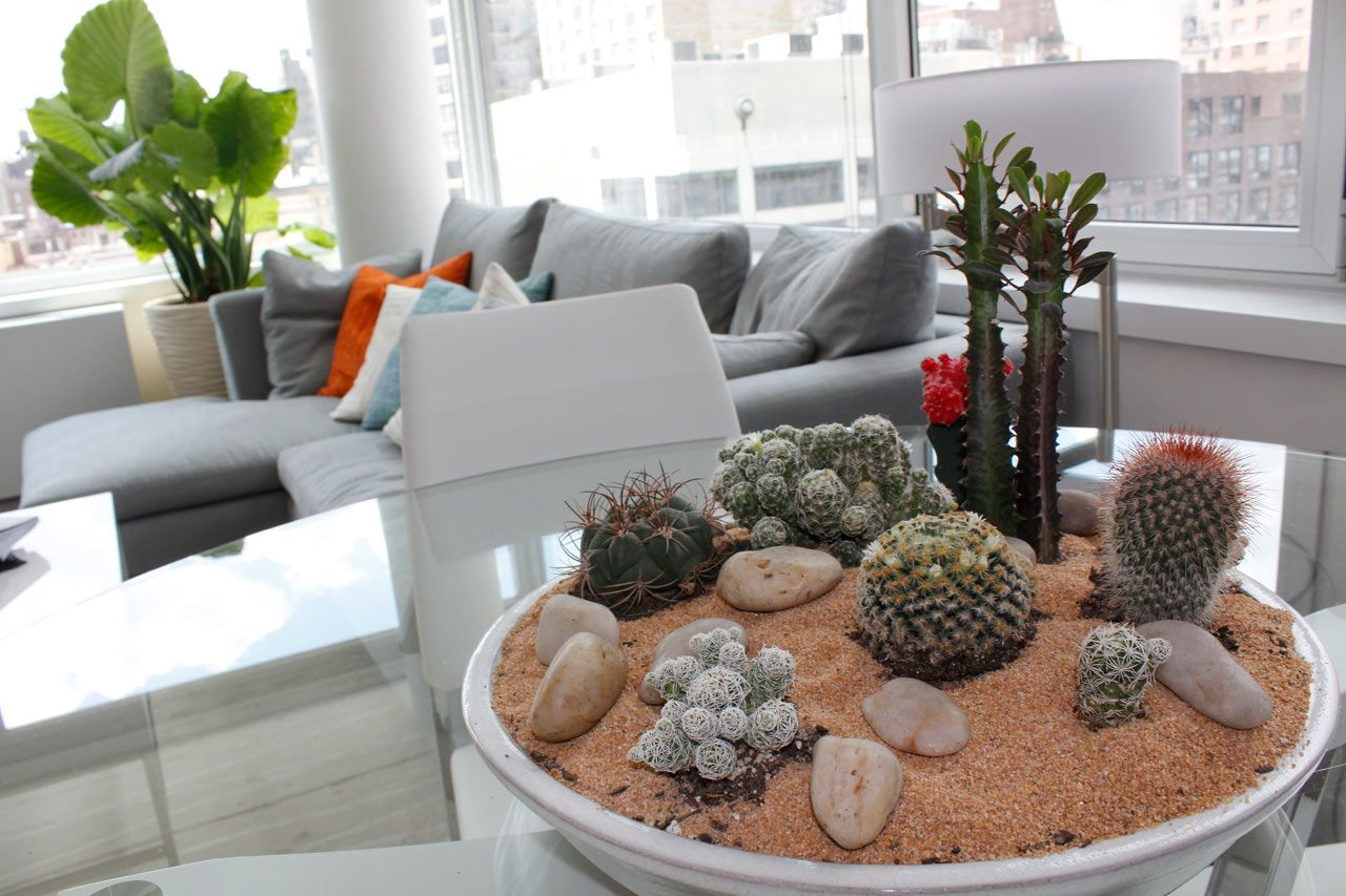 Modern Indoor Plant Ideas Cactus Home Interior Interior Design