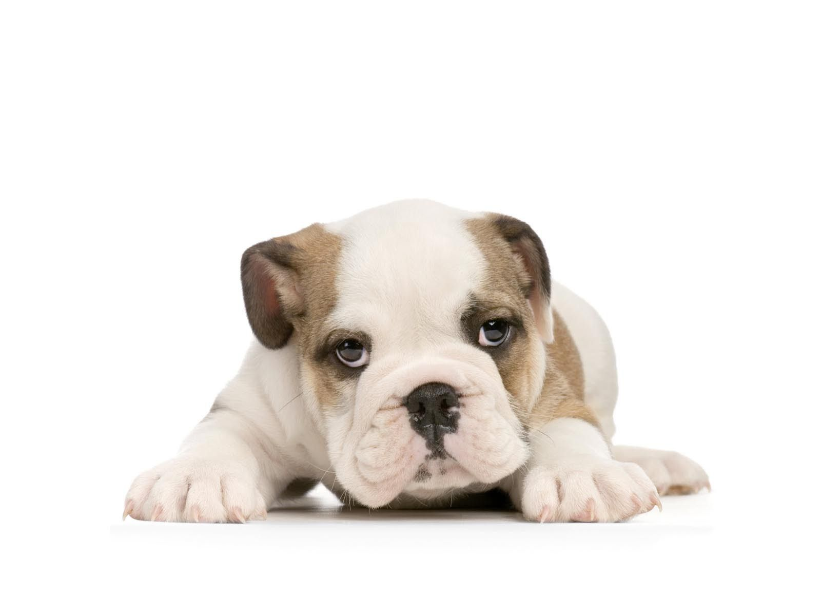 How To Remove Background From An Image American Bulldog Puppies