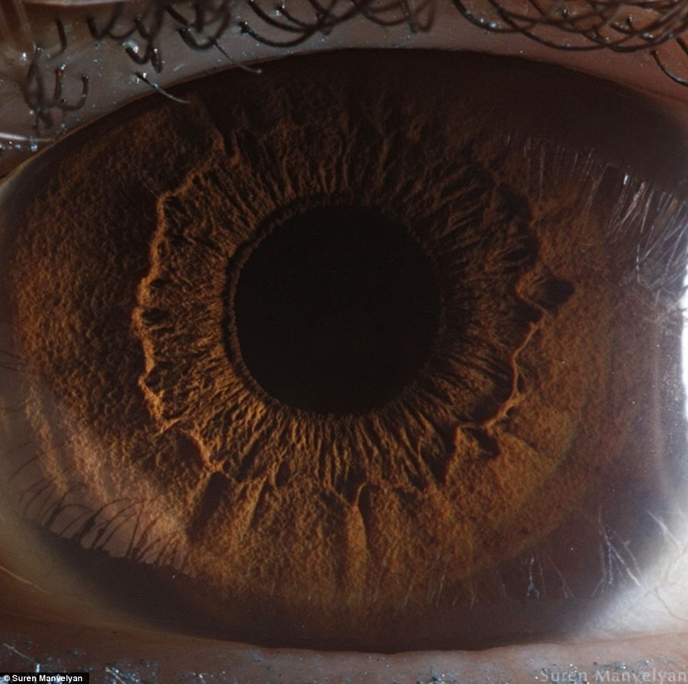The eyes have it: The iris pictured in remarkable detail by ...