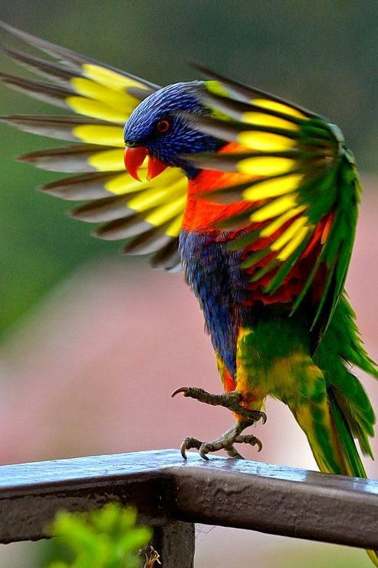 Image result for beautiful picture of the month of april birds