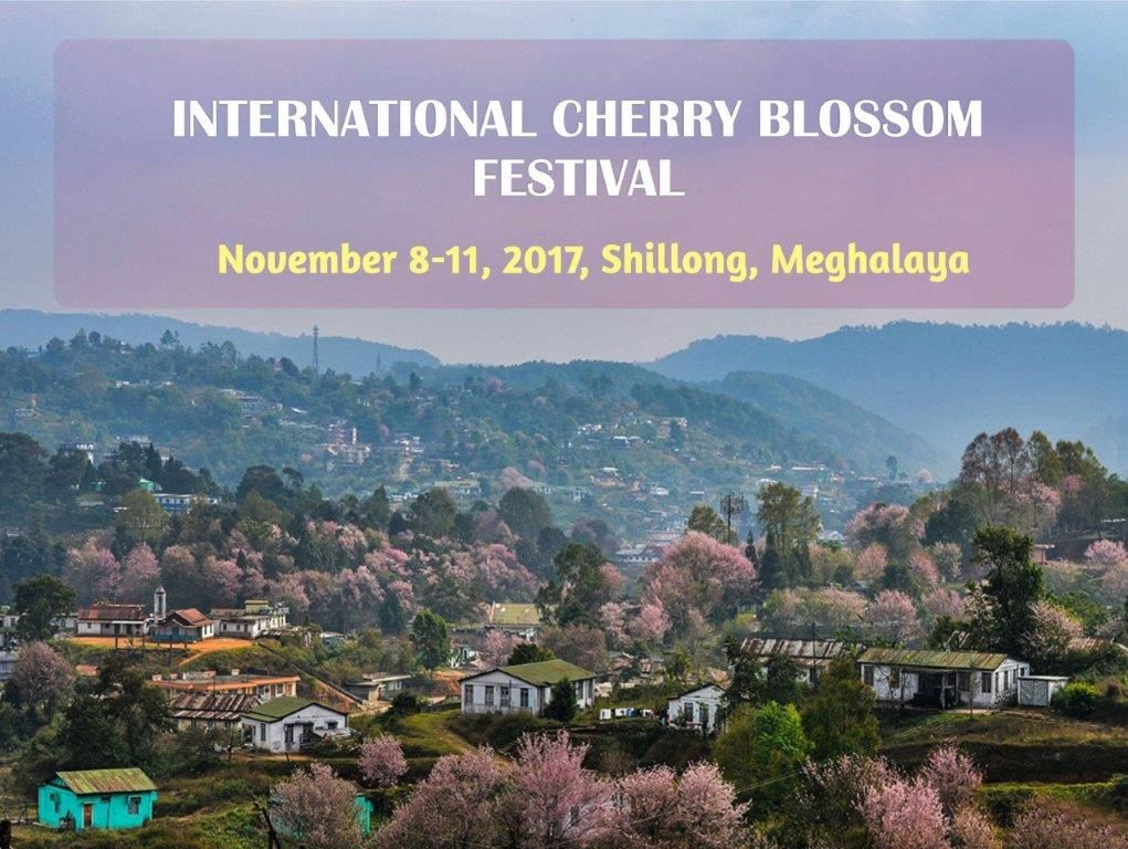 Japan In India India S 2nd Autumn Cherry Blossom Festival In Shillong Know It All Nov 8 11 2017 Get Cherry Blossom Festival Shillong Cherry Blossom