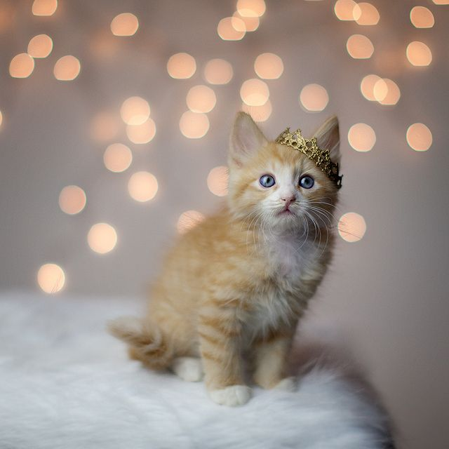 Prince Charlie Katzen