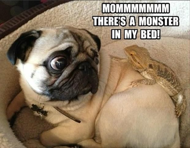 LOL dogs pictures of the hour (4:45:21 PM PST  Saturday, February 21, 2015) – 10 pics