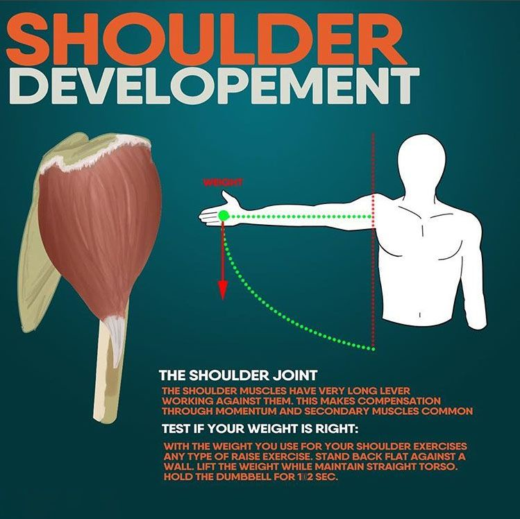 29++ What muscles flex the shoulder inspirations