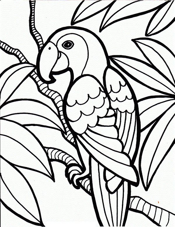 25 Cute Parrot Coloring Pages Your Toddler Will Love To Color #Toddlers  Jungle Coloring Pages, Bird Coloring Pages, Easy Coloring Pages