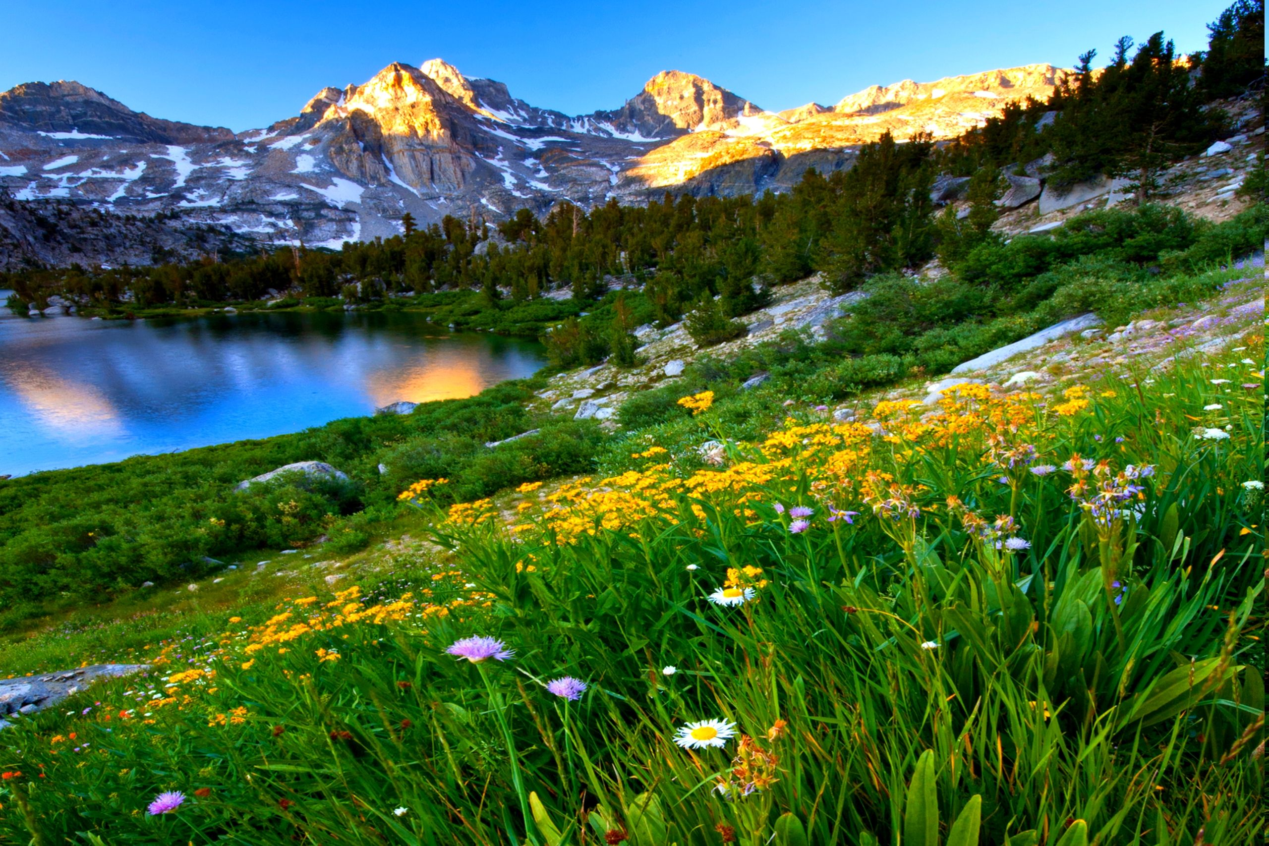 Mountain Spring Meadow Background Images Wallpapers Spring Wallpaper Spring Pictures