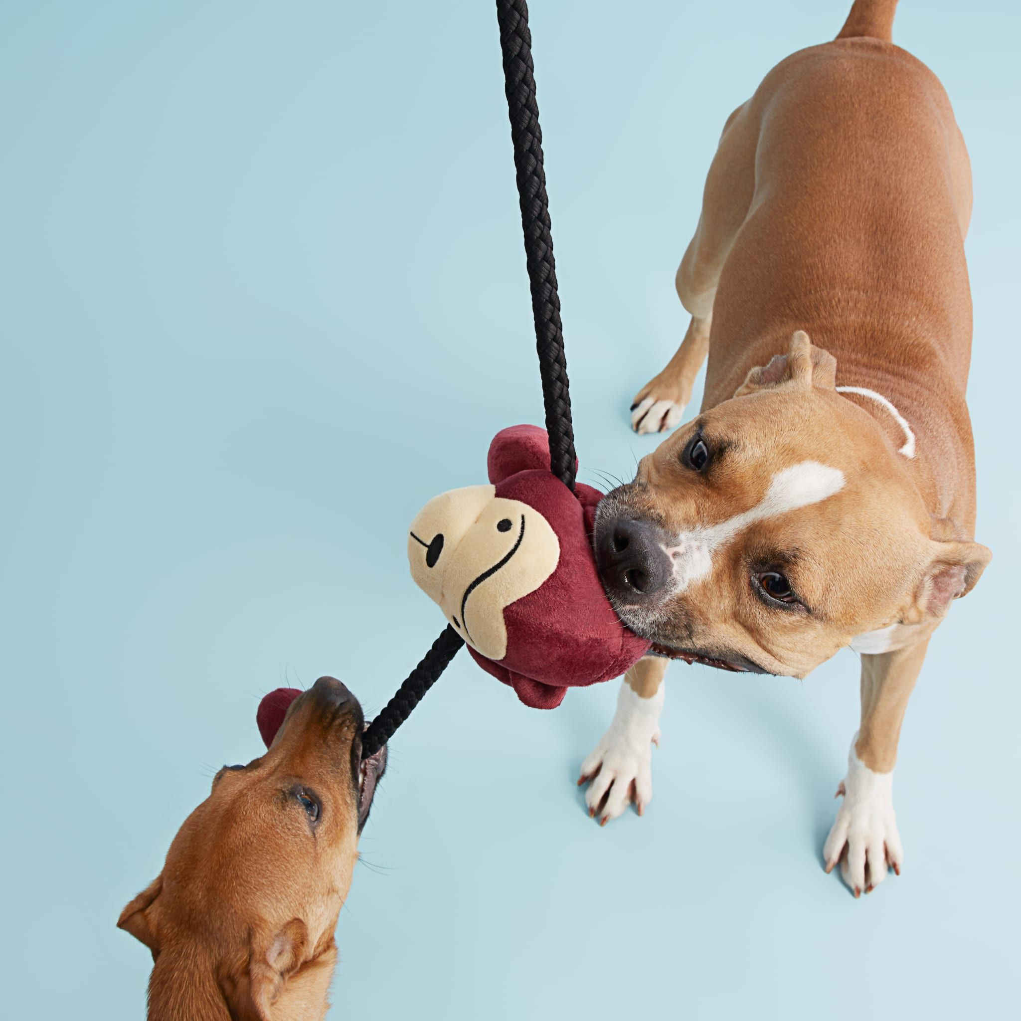 What Are The Best Toys For Pit Bulls Pitbulls Cool Toys Dog Toys