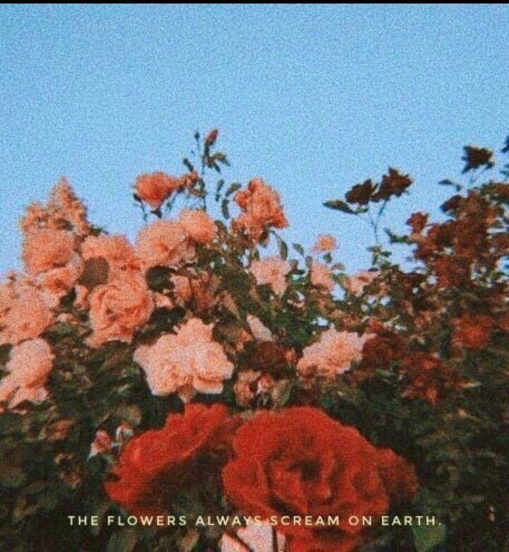 Aesthetic Sky Flowers Vintage Background Rose Lockscreen Https Weheartit Com Entry 326887864 Flower Aesthetic Aesthetic Grunge Pink Aesthetic