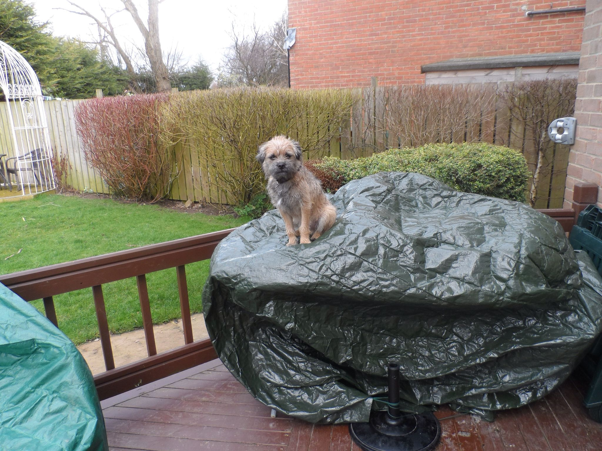 Marley - how on earth did he get up there?!!!