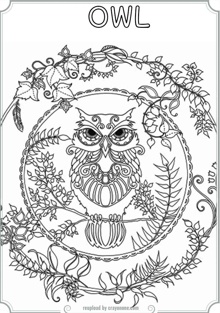 free medium coloring pages eassumecom with printable owl coloring pages