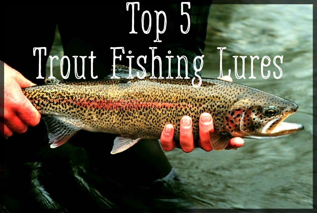 Top 5 Best Trout Lures Trout fishing lures, Trout