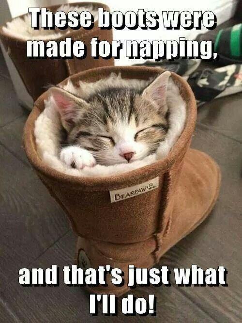 Good napping spot