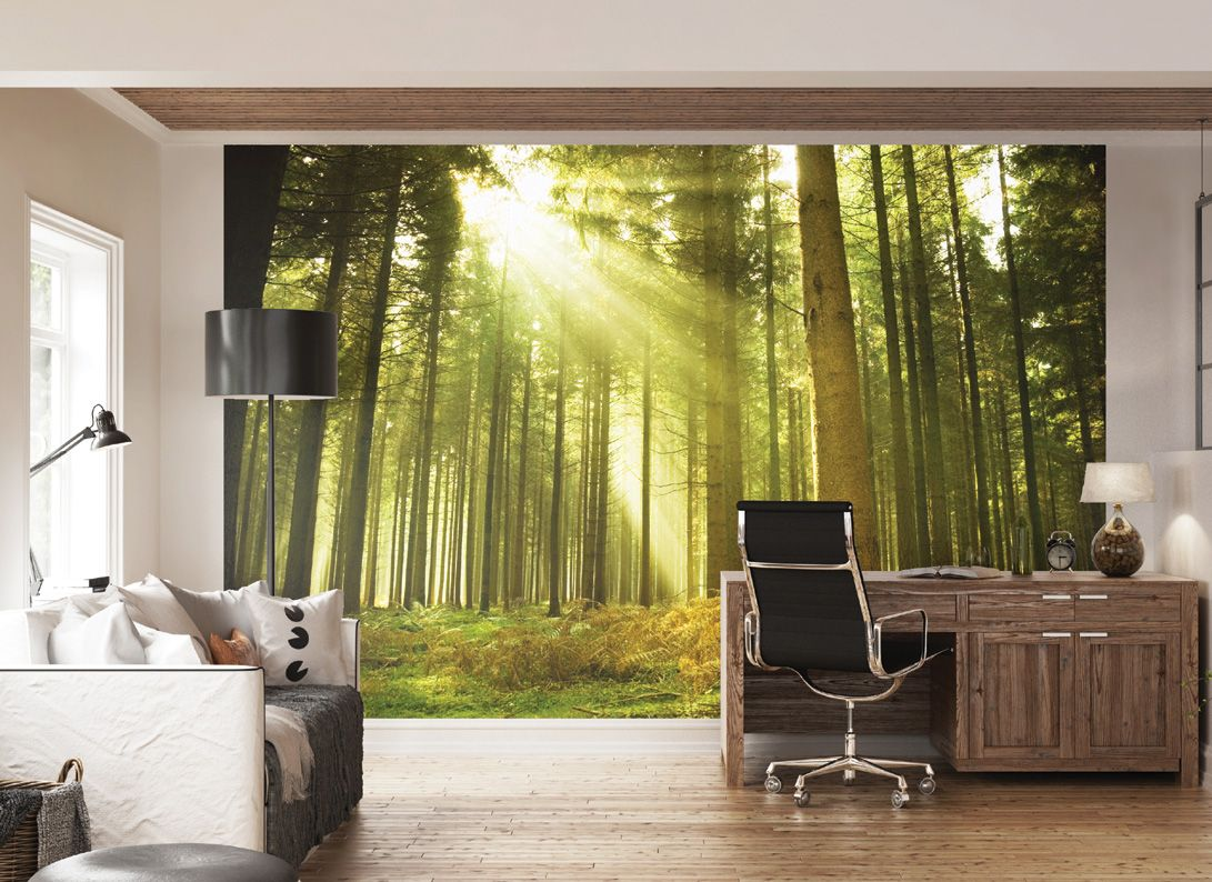 Sunlight Shining Through Trees In A Forest Wall Mural | Wall Art ...