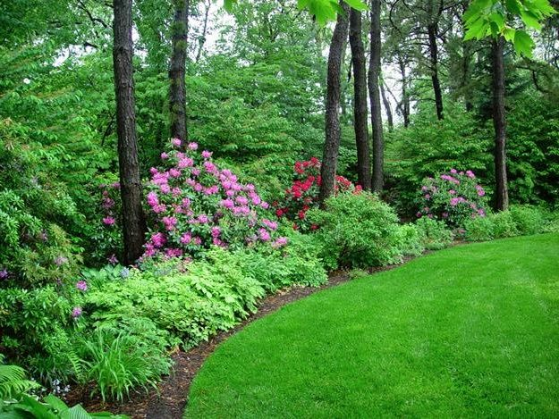 Landscaping A Wooded Lot Recent Photos The Commons Getty Collection Galleries World Wooded Backyard Landscape Wooded Landscaping Backyard Landscaping Designs