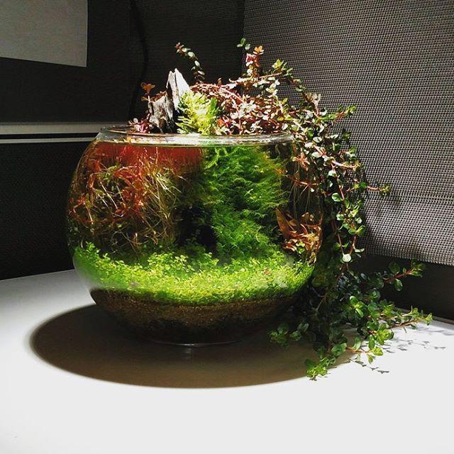 Still one of my favorite bowls by reddit user for Indoor gardening reddit