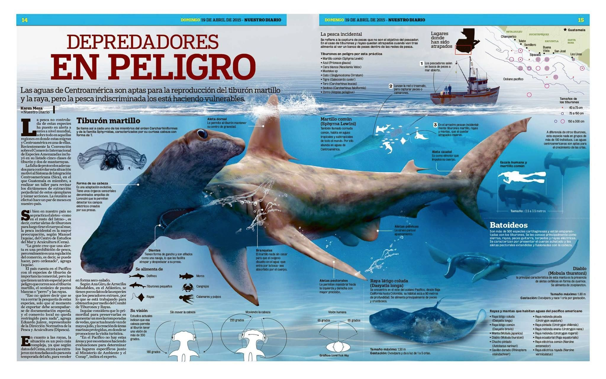 Trabajo De Infografía De Nuestro Diario De Guatemala Joel Torres Nos Comparte Este Bellísimo Trabajo Sobre Lo Infografia De Animales Animales Tiburon Martillo