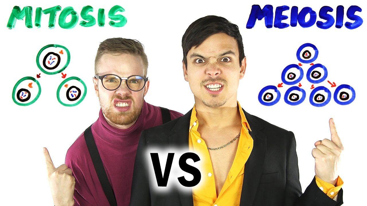 Mitosis vs Meiosis RAP BATTLE! - YouTube   Bio: Mitosis Meosis ...