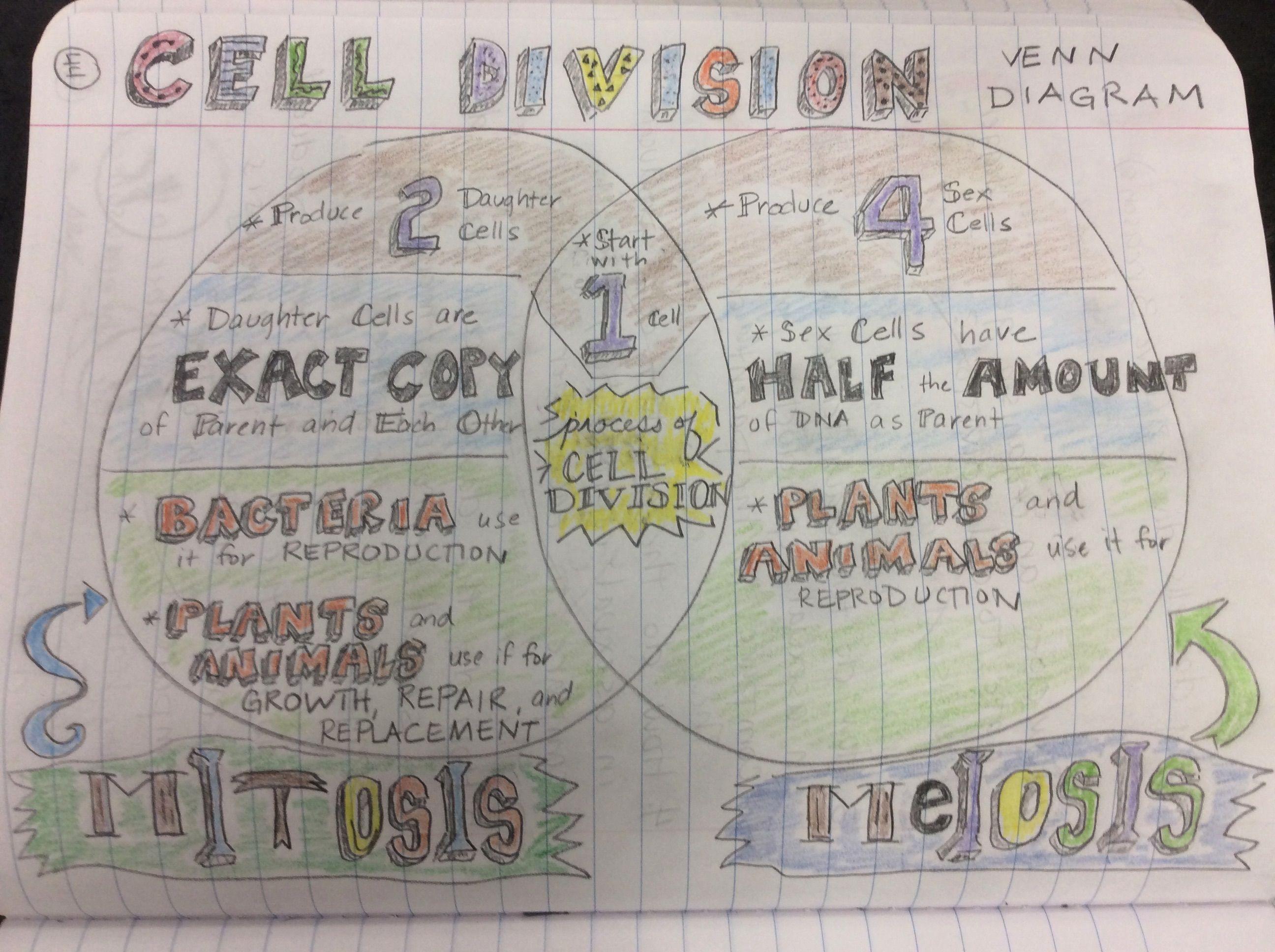 Cell Division Venn Diagram