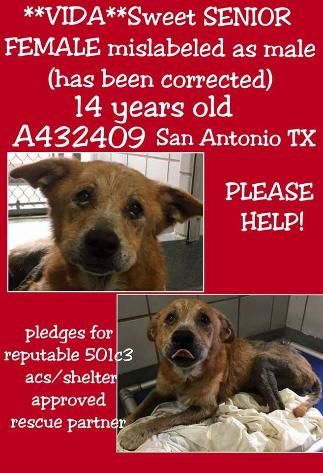 5/14/17 A 14yearold dog, who appears to have lived alone