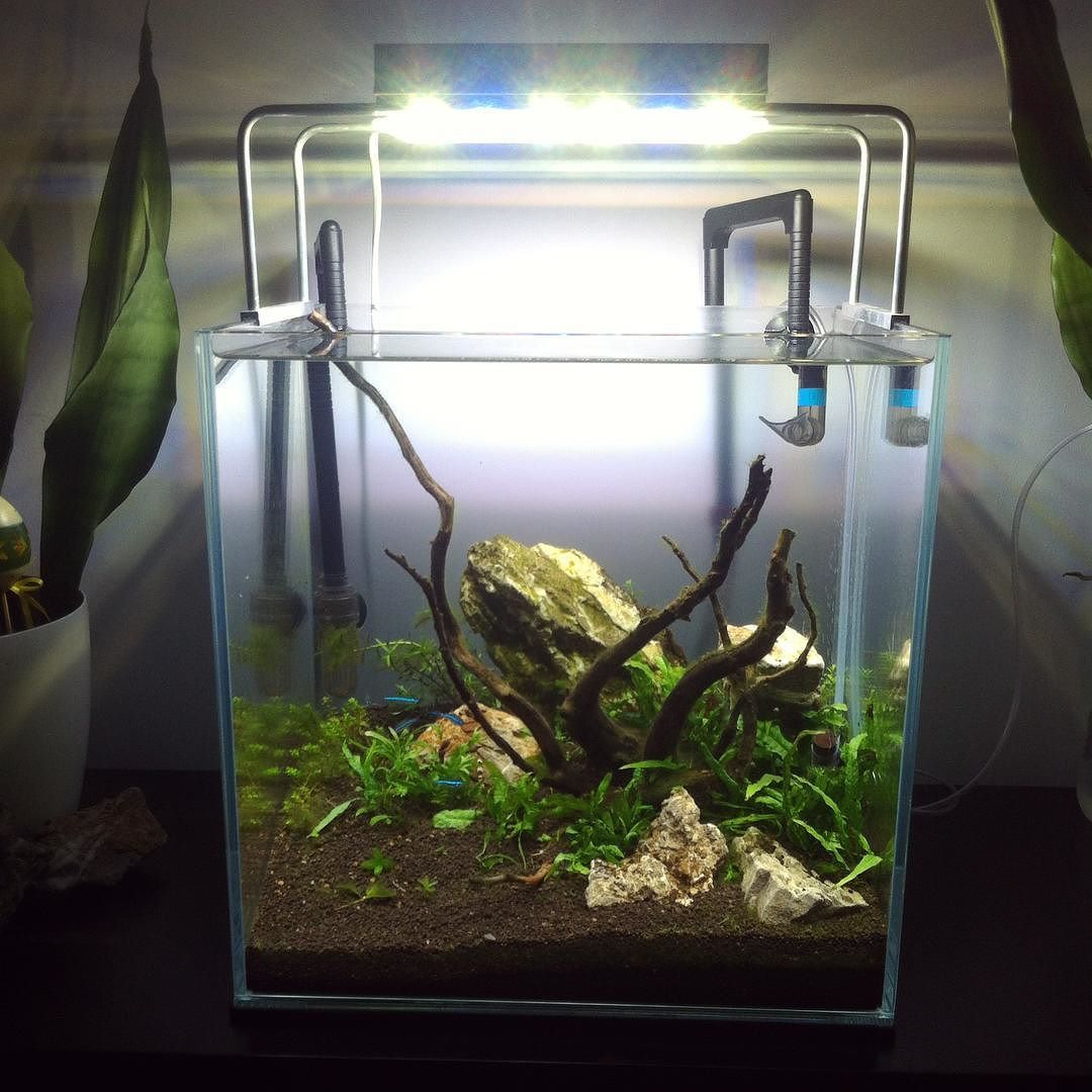 Ordinaire #new #look #of #aquarium #with #planted #microsorium #narrow. AquascapingLedAquariumsHomemade  Ice