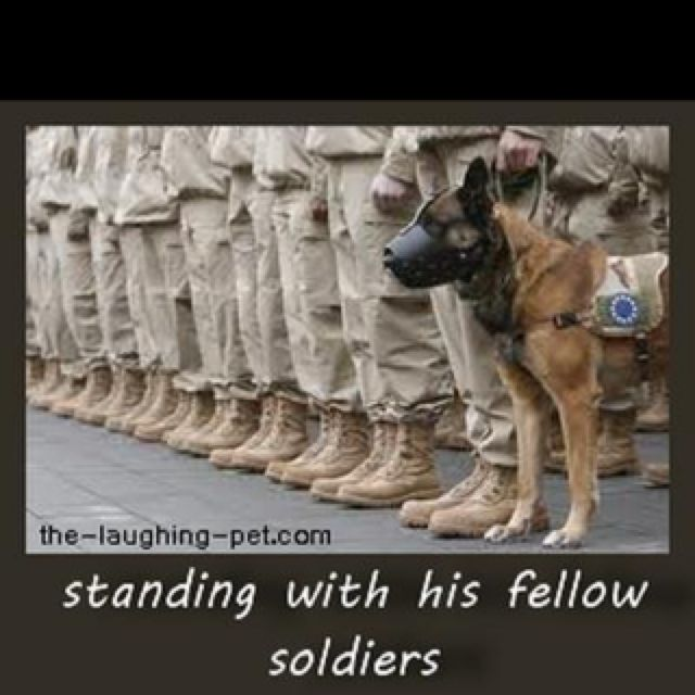 So loyal...... Thank You,Jesus for dogs, big & small