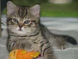lief katje