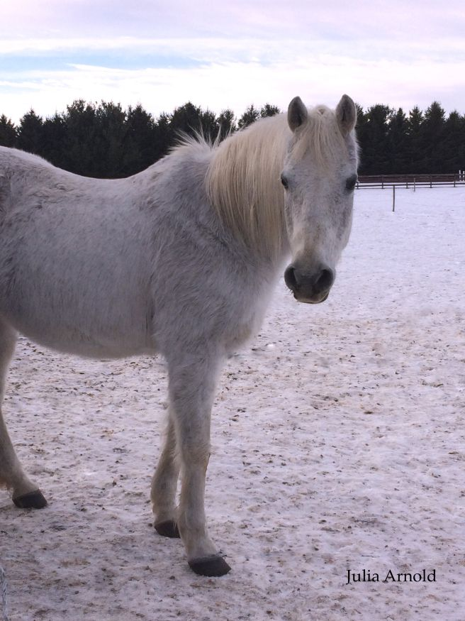 White Horse & White Snow. {JAEquinePhotography.com}