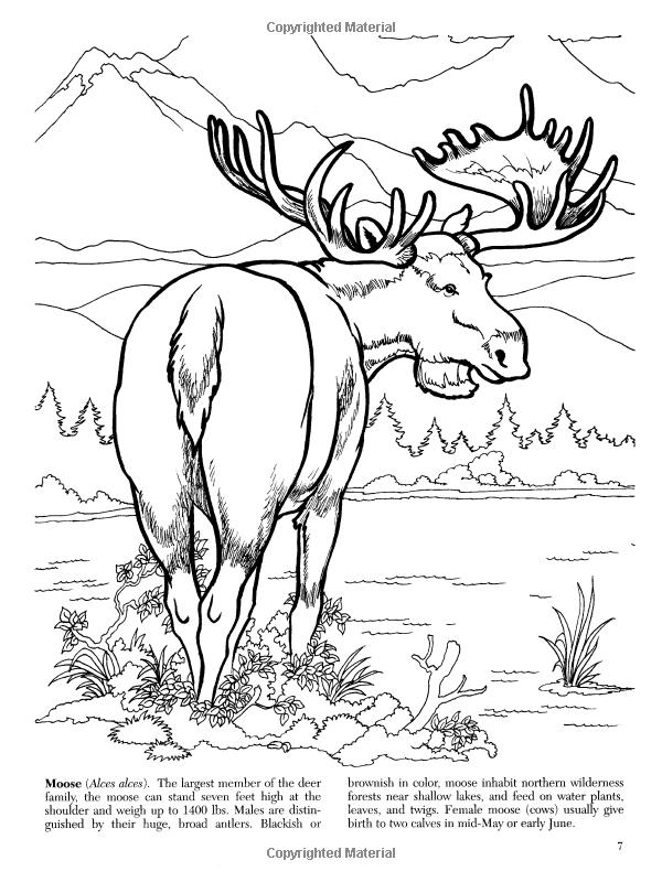 Alaskan Wildlife Coloring Book (Dover Nature Coloring Book): Jan Sovak, Coloring  Books: 9780486452210 Coloring Books, Alaskan Wildlife, Animal Silhouette