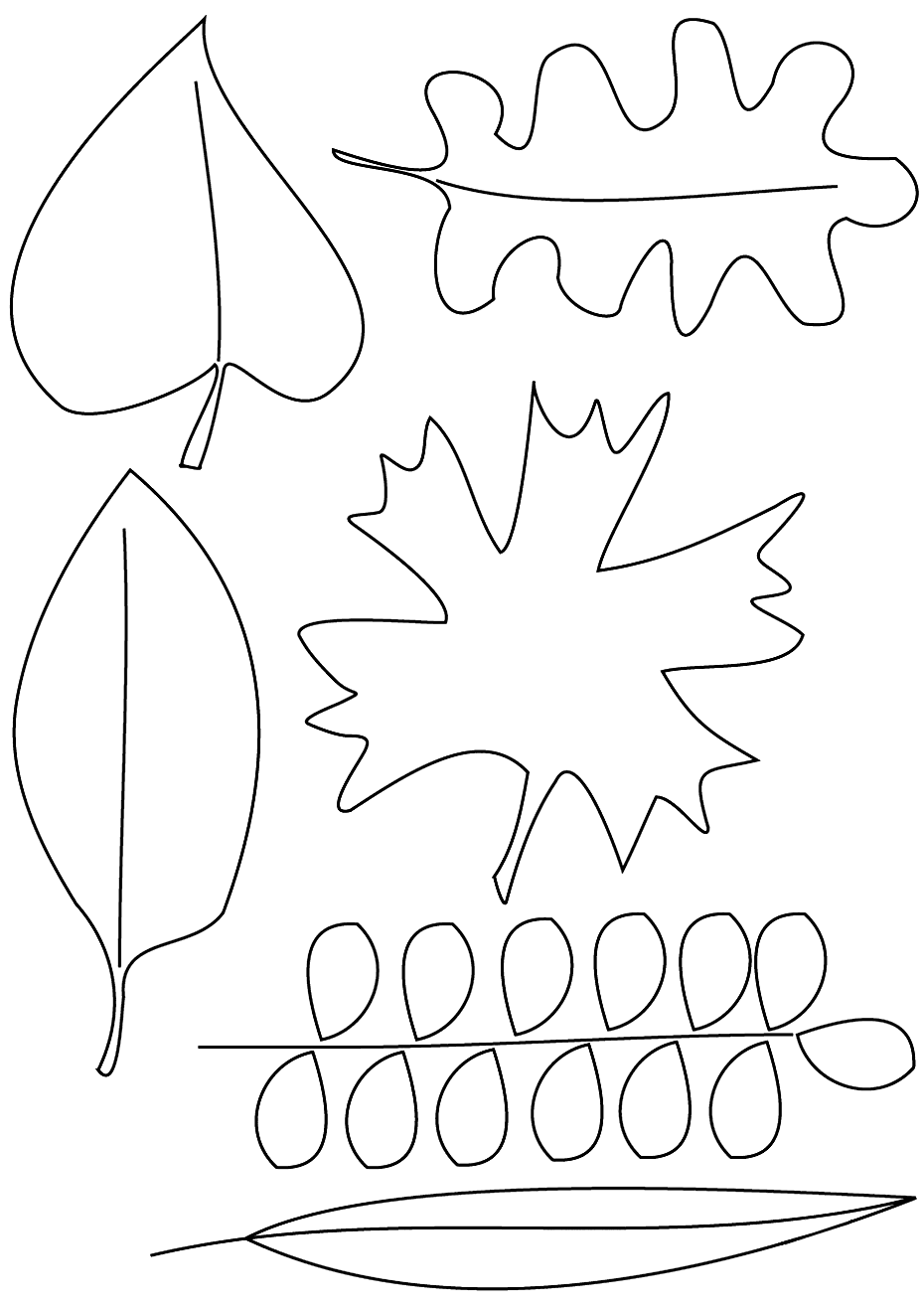 Types Of Fall Leaves Coloring Pgae coloring.rocks