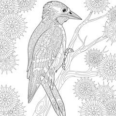 Pin Auf Coloring Birds And Feathers