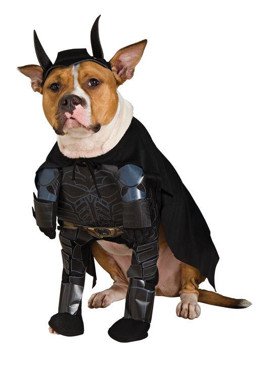 Batman Halloween Dog Costume With Arms Pet Halloween Costumes