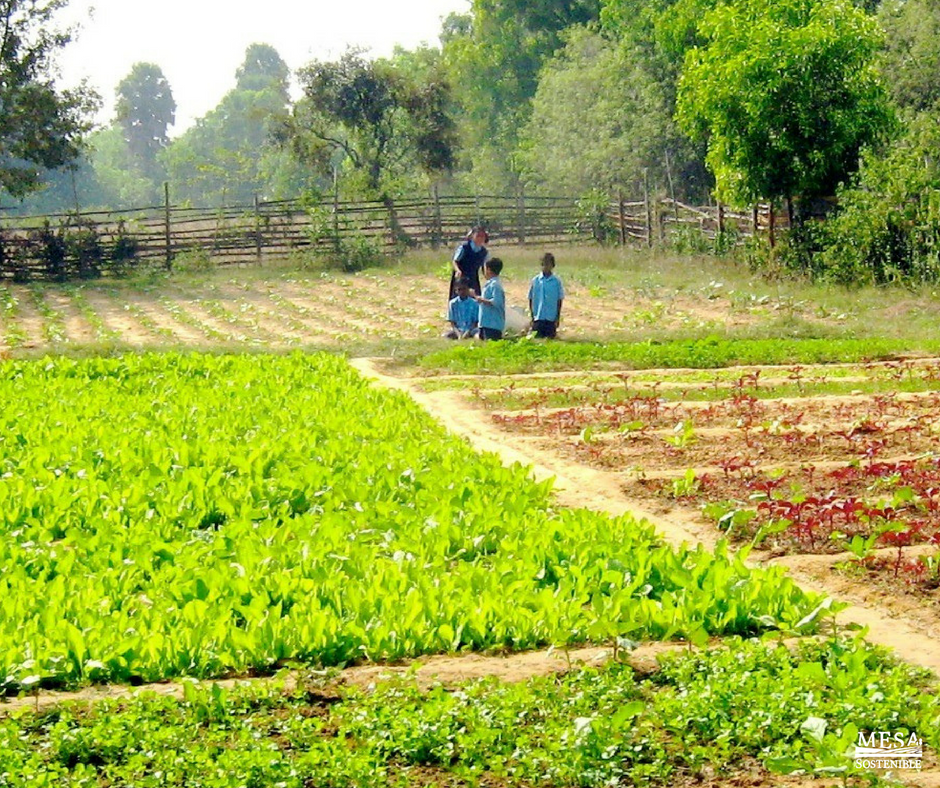 Organic Farming Practices Reduce Pollution Conserve Water Reduce Soil Erosion Increase Soil Fertility And Use Less Energy Organic