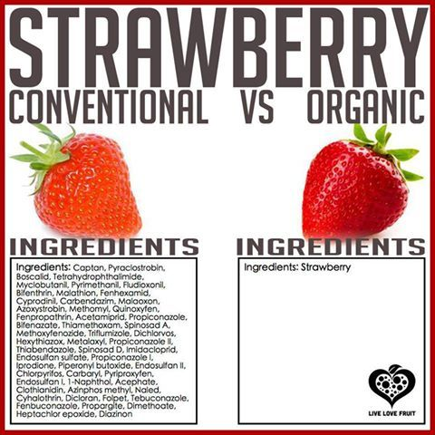 Excellent Comparison Between A Conventional Strawberry And An