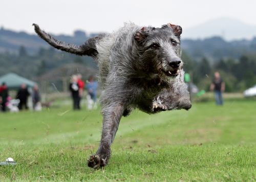 hounddogsrunning:  by Paul Roberts on Flickr
