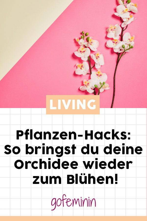 Pflanzen-Hacks: So bringst du deine Orchidee wieder zum Blühen ...