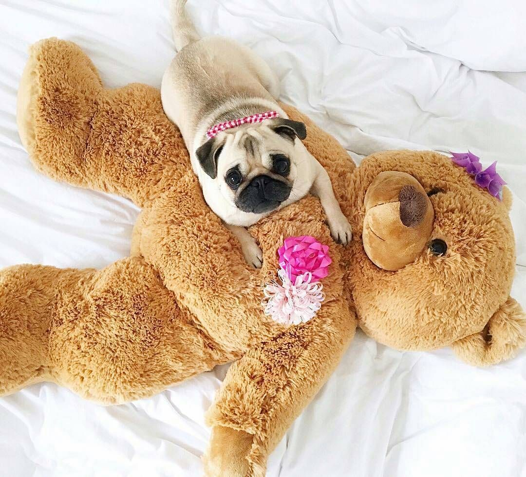 images about pugs on pinterest copper brooches and posts