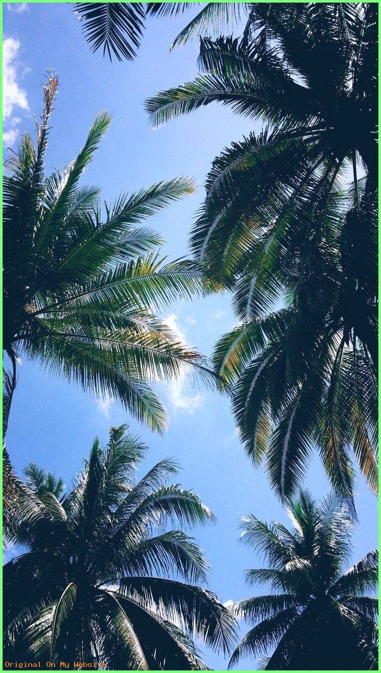 Iphone Wallpapers Tumblr Palm Trees Iphonewallpaperstumblraesthetic Iphonewall Wallpaper Tumblr Lockscreen Nature Iphone Wallpaper Tree Wallpaper Iphone