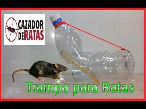 Como Acabar Con Las Ratas En El Campo How To Make The Rats Trap With Pvc Pipes Youtube Trampa Para