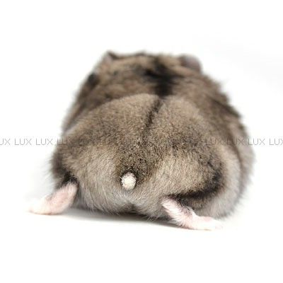 Hamster butts are the big hipe in Japan! Here are a few of our butts...