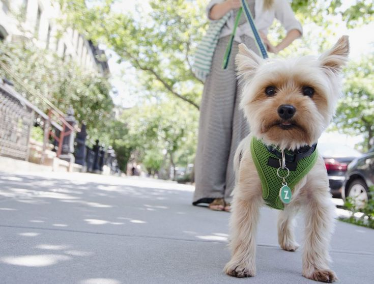 These are the ten most dogfriendly cities in the USA