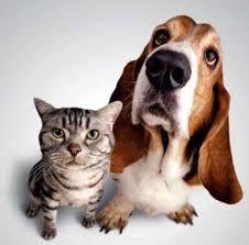 Resultado de imagem para Pets