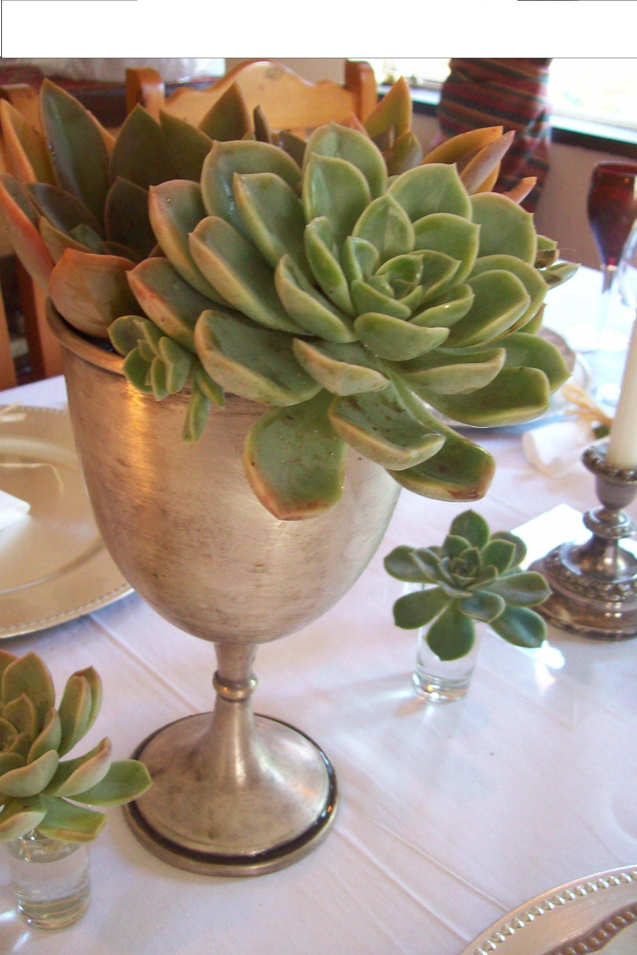 school cup. Planter pots, Interior projects, Succulents