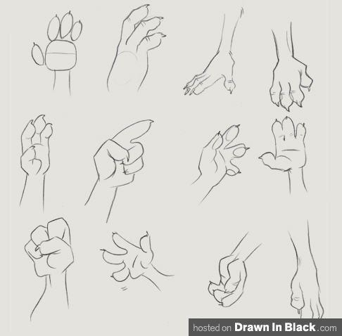 dibujar manos de animal  bocetos de animales bocetos