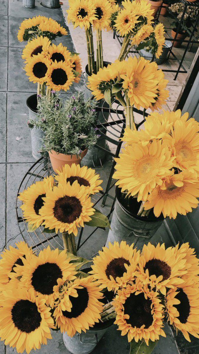 Alyson On Twitter Sunflower Wallpaper Love Flowers Beautiful Flowers