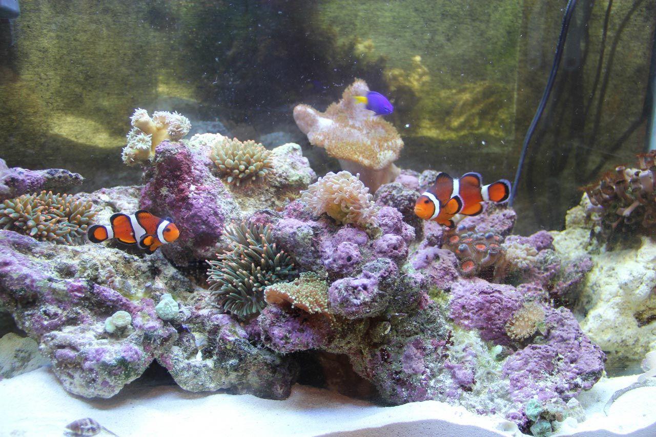 Cool Saltwater Aquarium Fish Aquarium Fish Pinterest Aquarium
