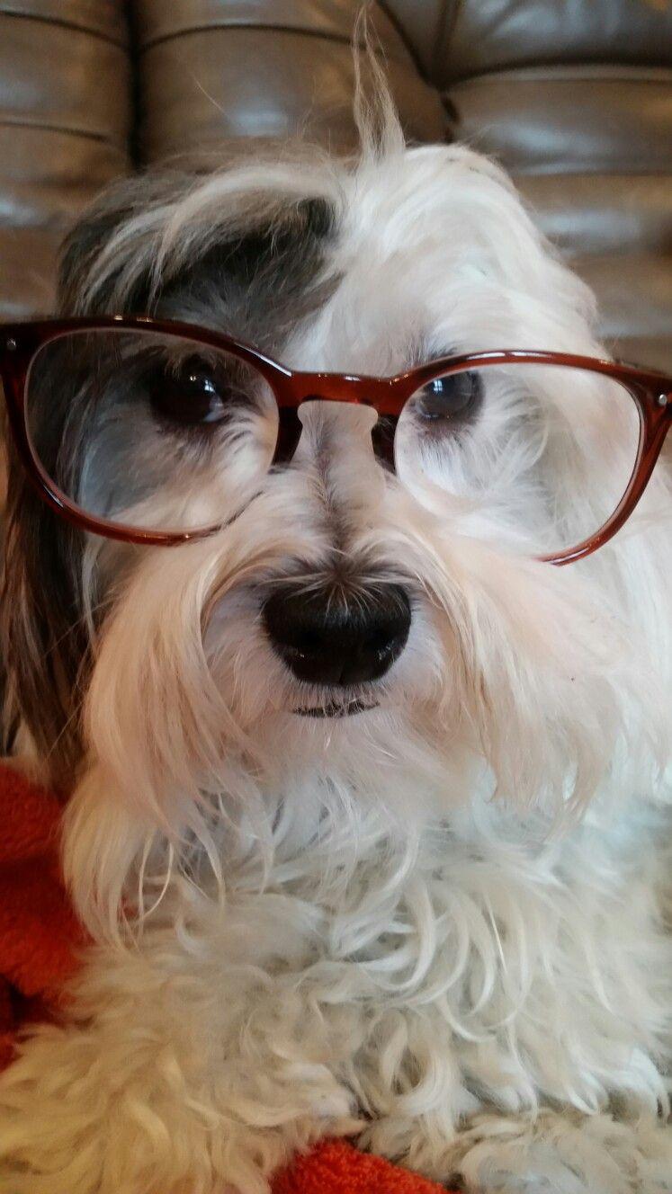Pin Von Annette B Auf Tiere Havaneser Hund Havaneser Bolonka