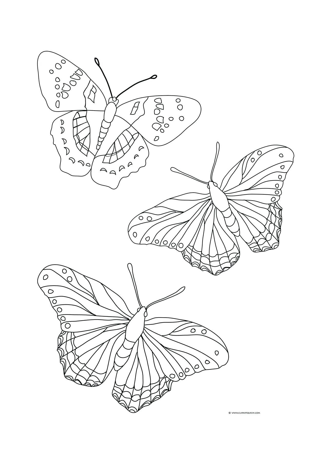 Pin On Butterfly Coloring Page